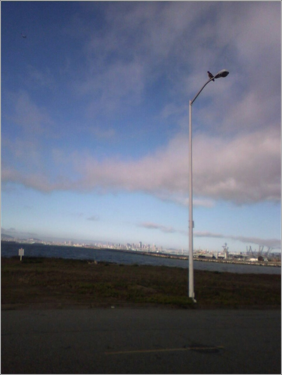 hawk on lamppost